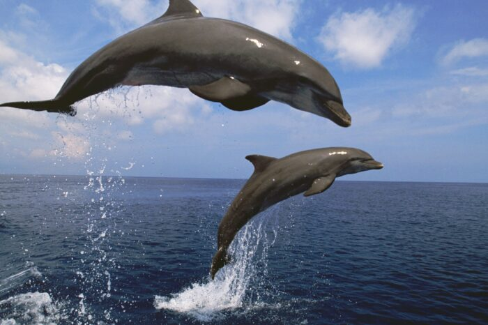Dolphin Watching Private Tour / From Lisbon